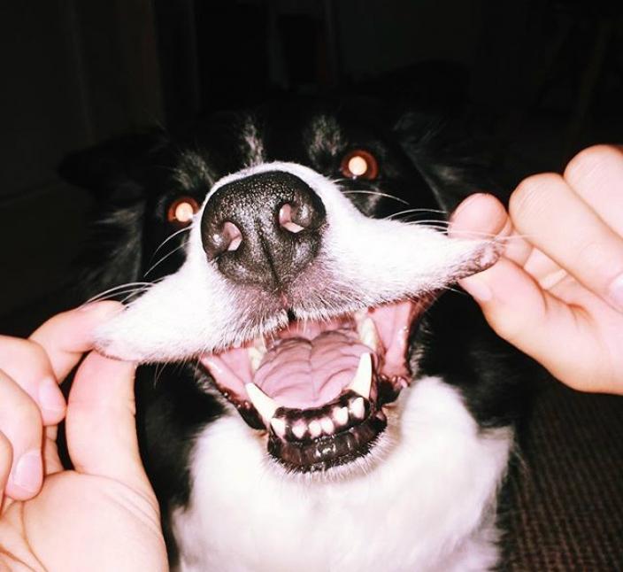 Die richtige Zahnpflege für den Hund