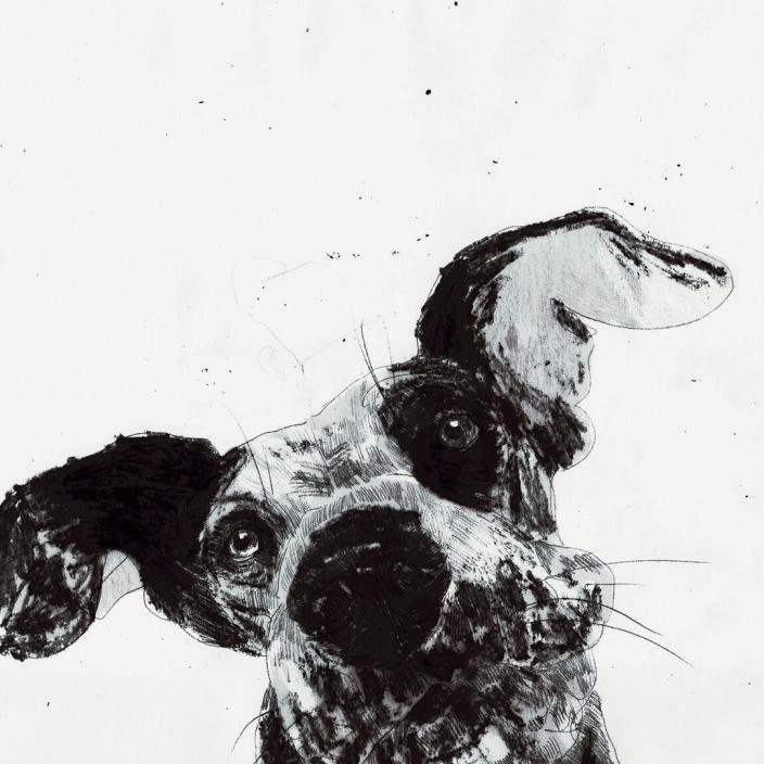 Ausgewogene Ernährung für Hunde