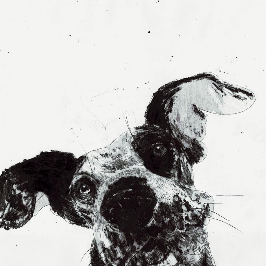 Ausgewogene Ernährung für Hunde - Hundeernährung