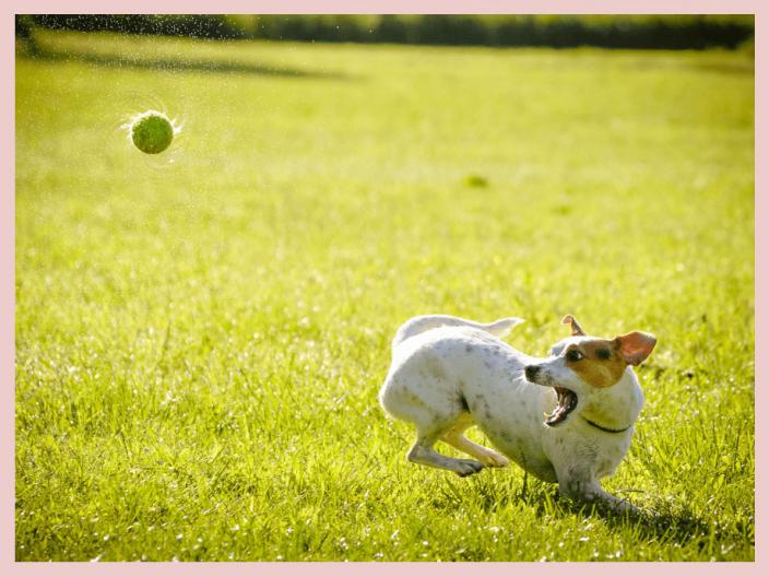 Hunde in Action richtig fotografieren und filmen
