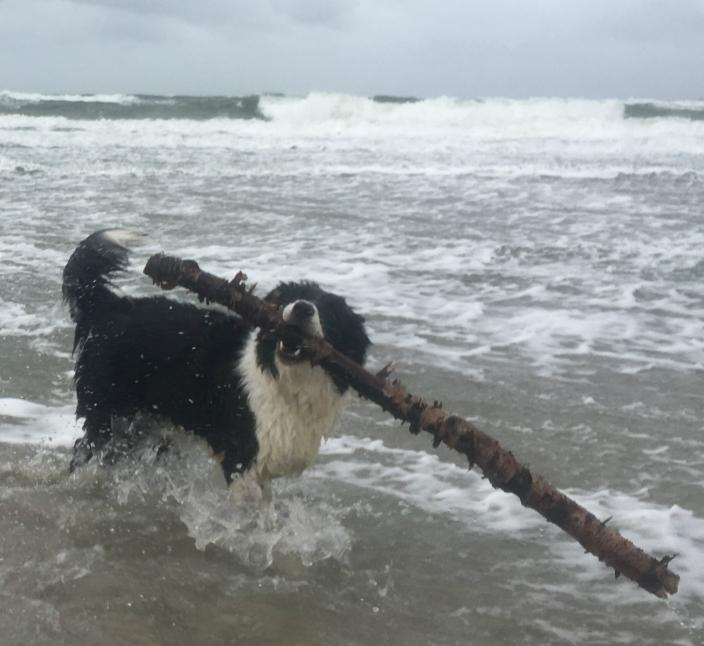 Urlaub mit dem Hund - 3 wichtige Tipps